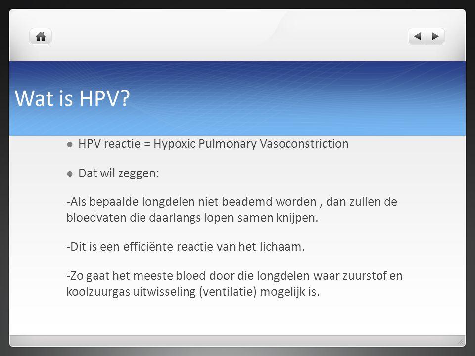 Wat is HPV? HPV reactie = Hypoxic Pulmonary Vasoconstriction Dat wil zeggen: -Als bepaalde longdelen niet beademd worden, dan zullen de bloedvaten die