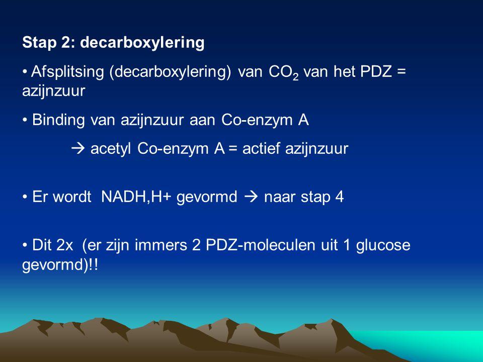 Stap 2: decarboxylering Afsplitsing (decarboxylering) van CO 2 van het PDZ = azijnzuur Binding van azijnzuur aan Co-enzym A  acetyl Co-enzym A = acti