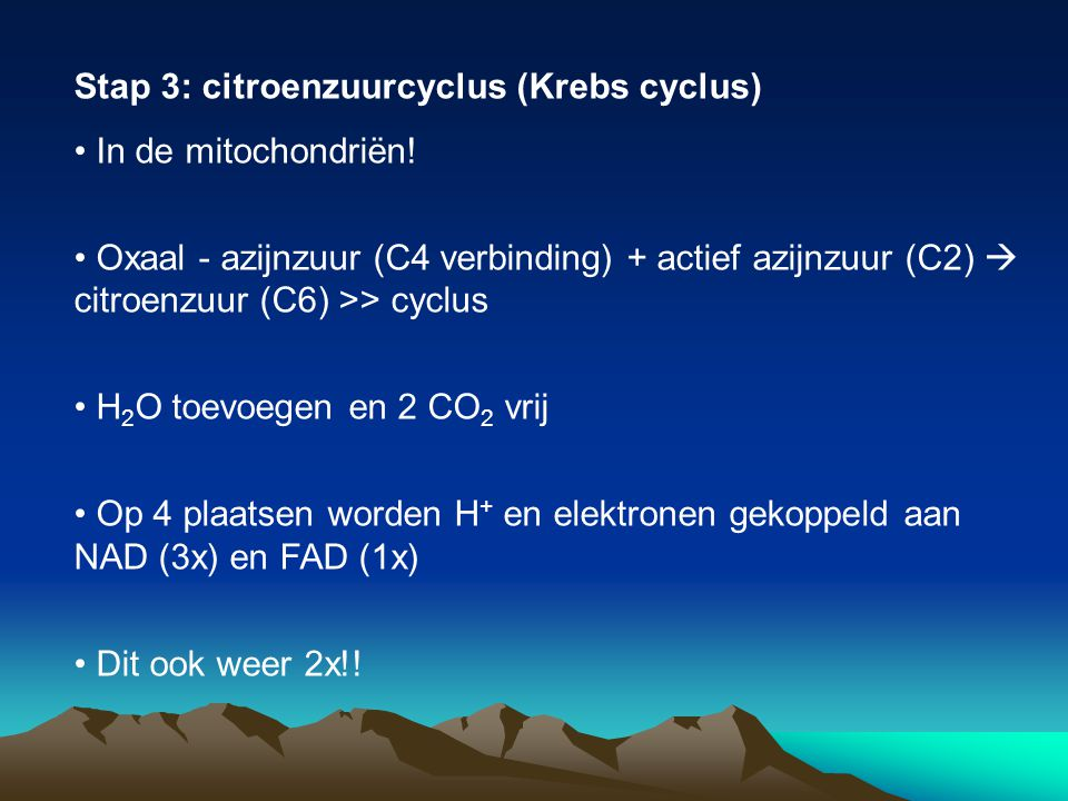 Stap 3: citroenzuurcyclus (Krebs cyclus) In de mitochondriën! Oxaal - azijnzuur (C4 verbinding) + actief azijnzuur (C2)  citroenzuur (C6) >> cyclus H
