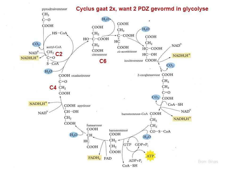 C4 C2 C6 Cyclus gaat 2x, want 2 PDZ gevormd in glycolyse Bron: Binas