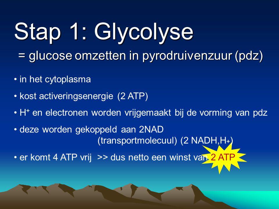 Stap 1: Glycolyse = glucose omzetten in pyrodruivenzuur (pdz) in het cytoplasma kost activeringsenergie (2 ATP) H + en electronen worden vrijgemaakt b