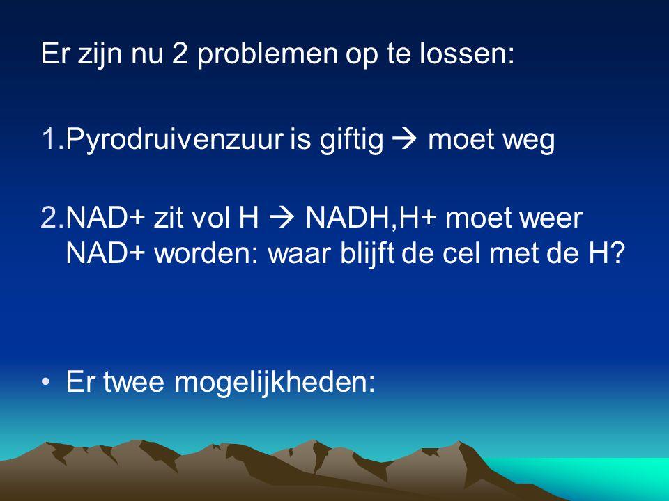 Er zijn nu 2 problemen op te lossen: 1.Pyrodruivenzuur is giftig  moet weg 2.NAD+ zit vol H  NADH,H+ moet weer NAD+ worden: waar blijft de cel met d