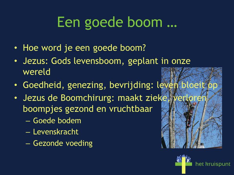 Een goede boom … Hoe word je een goede boom? Jezus: Gods levensboom, geplant in onze wereld Goedheid, genezing, bevrijding: leven bloeit op Jezus de B