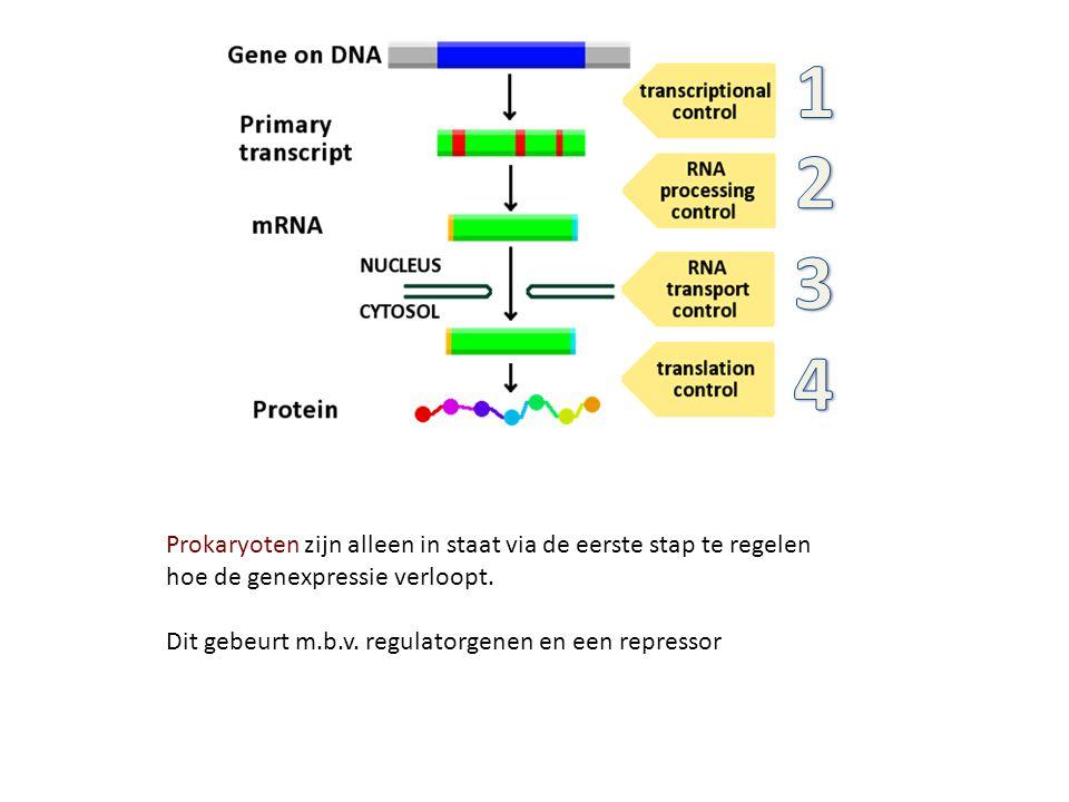 Prokaryoten zijn alleen in staat via de eerste stap te regelen hoe de genexpressie verloopt. Dit gebeurt m.b.v. regulatorgenen en een repressor