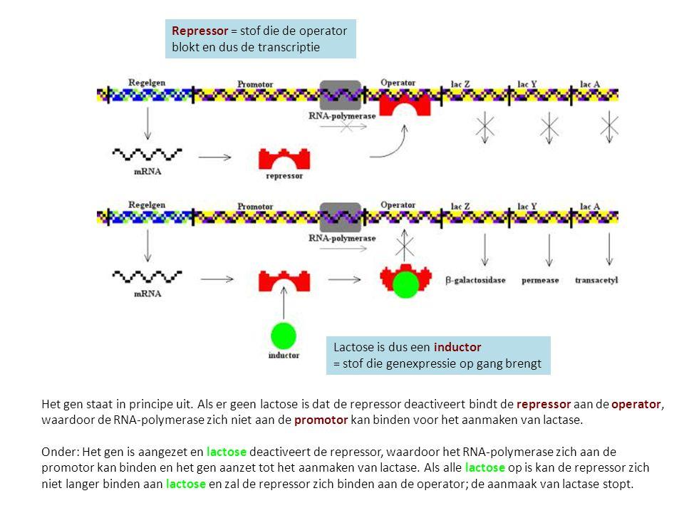 Het gen staat in principe uit. Als er geen lactose is dat de repressor deactiveert bindt de repressor aan de operator, waardoor de RNA-polymerase zich