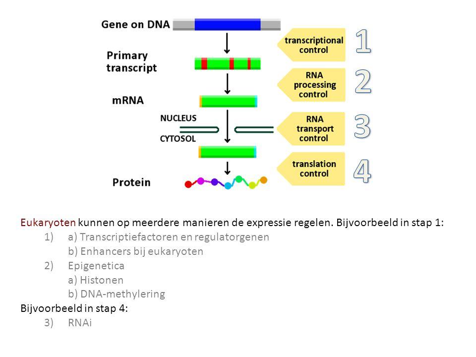 Eukaryoten kunnen op meerdere manieren de expressie regelen. Bijvoorbeeld in stap 1: 1) a) Transcriptiefactoren en regulatorgenen b) Enhancers bij euk