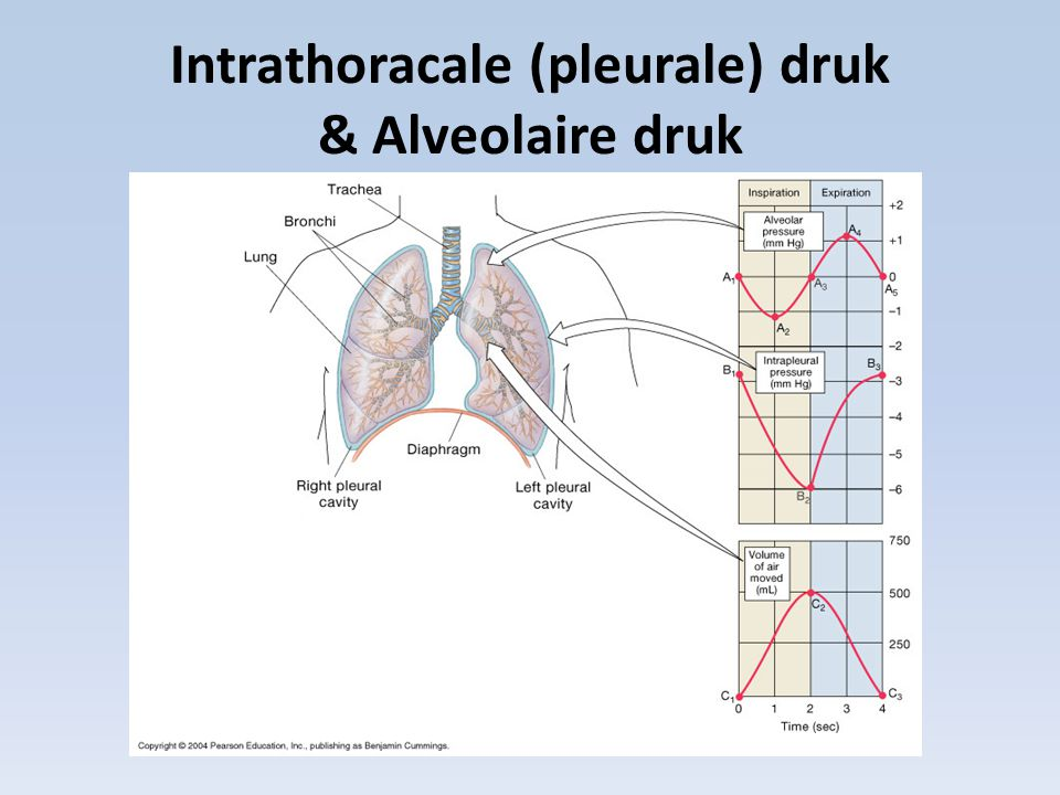 Intrathoracale (pleurale) druk & Alveolaire druk