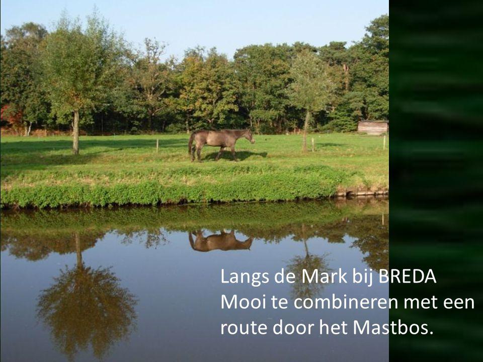 Ten zuiden van de KOP van het Land –Dordrecht rijdt je zo een nieuw natuurgebied in. De Polder teruggegeven aan het water. Nu nog wat kaal. Maar vogel