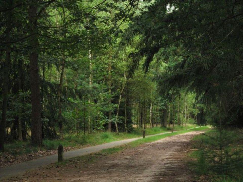 Langs de Mark bij BREDA Mooi te combineren met een route door het Mastbos.