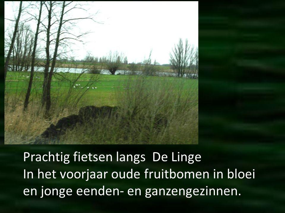 Open en mooi landschap. In de polders, zoals hier in de Alblasserwaard.