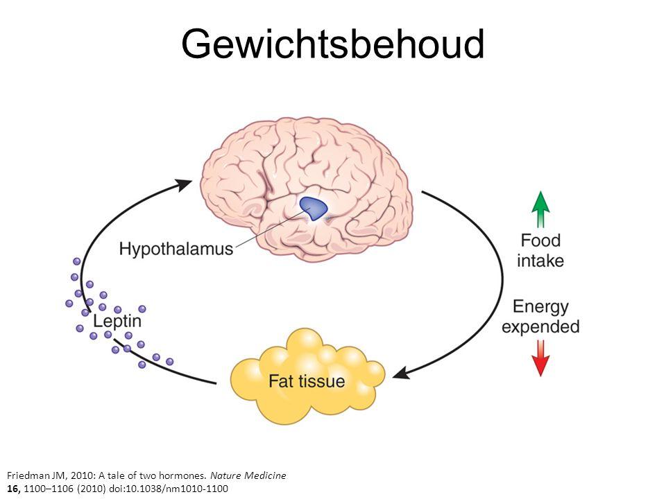 Gewichtsbehoud Friedman JM, 2010: A tale of two hormones. Nature Medicine 16, 1100–1106 (2010) doi:10.1038/nm1010-1100