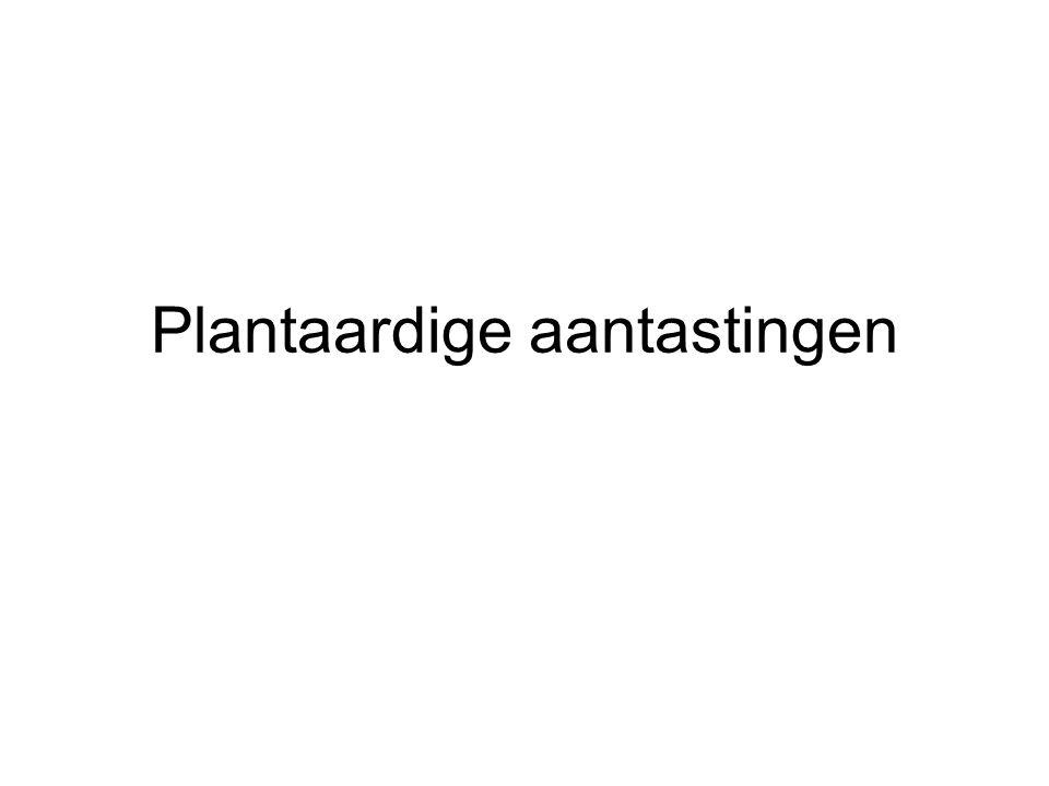 Plantaardige aantastingen