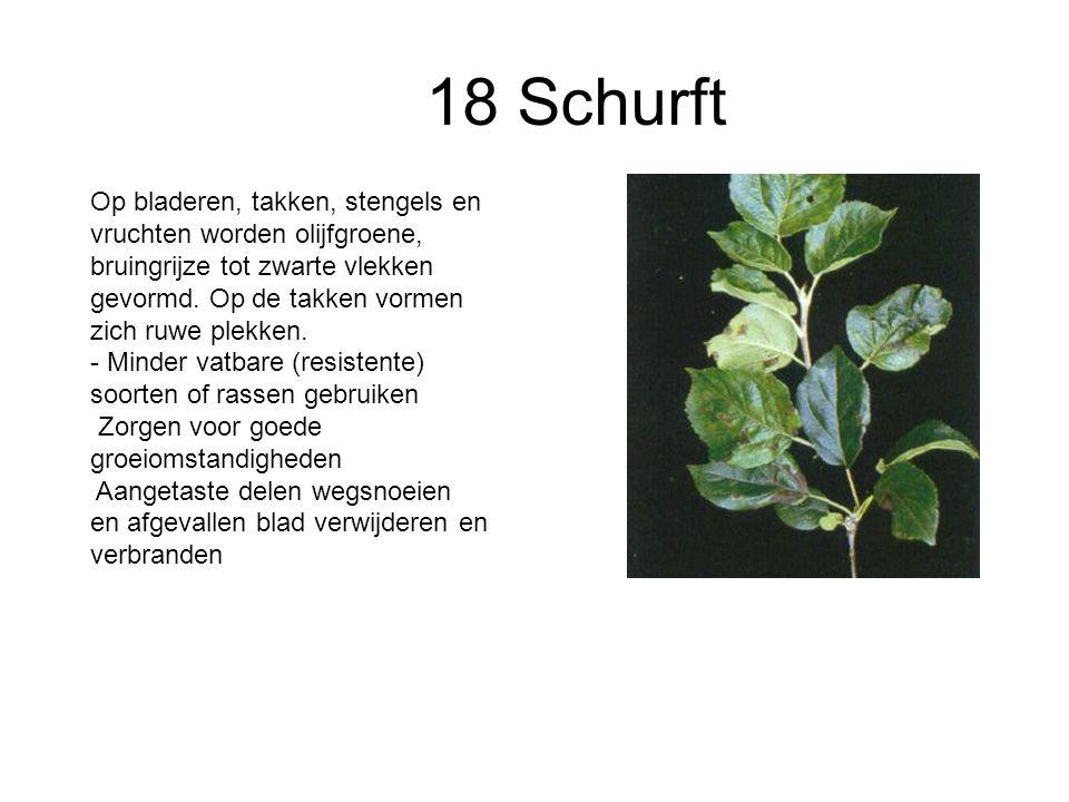 18 Schurft Op bladeren, takken, stengels en vruchten worden olijfgroene, bruingrijze tot zwarte vlekken gevormd. Op de takken vormen zich ruwe plekken