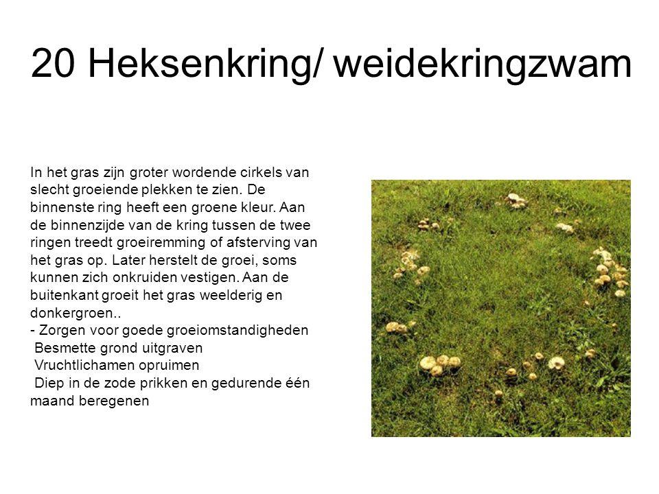 20 Heksenkring/ weidekringzwam In het gras zijn groter wordende cirkels van slecht groeiende plekken te zien. De binnenste ring heeft een groene kleur