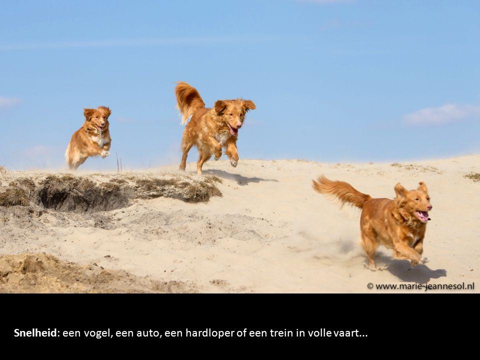 Snelheid: een vogel, een auto, een hardloper of een trein in volle vaart...