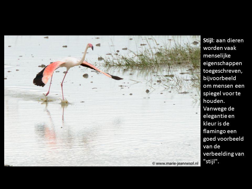 Stijl: aan dieren worden vaak menselijke eigenschappen toegeschreven, bijvoorbeeld om mensen een spiegel voor te houden. Vanwege de elegantie en kleur
