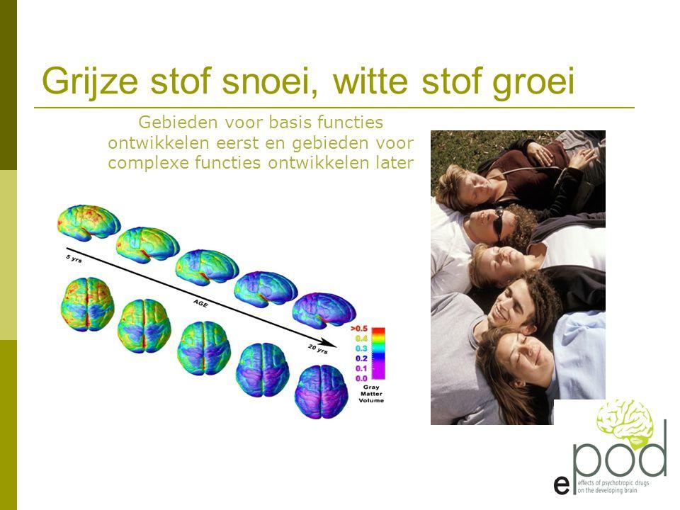 Grijze stof snoei, witte stof groei Gebieden voor basis functies ontwikkelen eerst en gebieden voor complexe functies ontwikkelen later