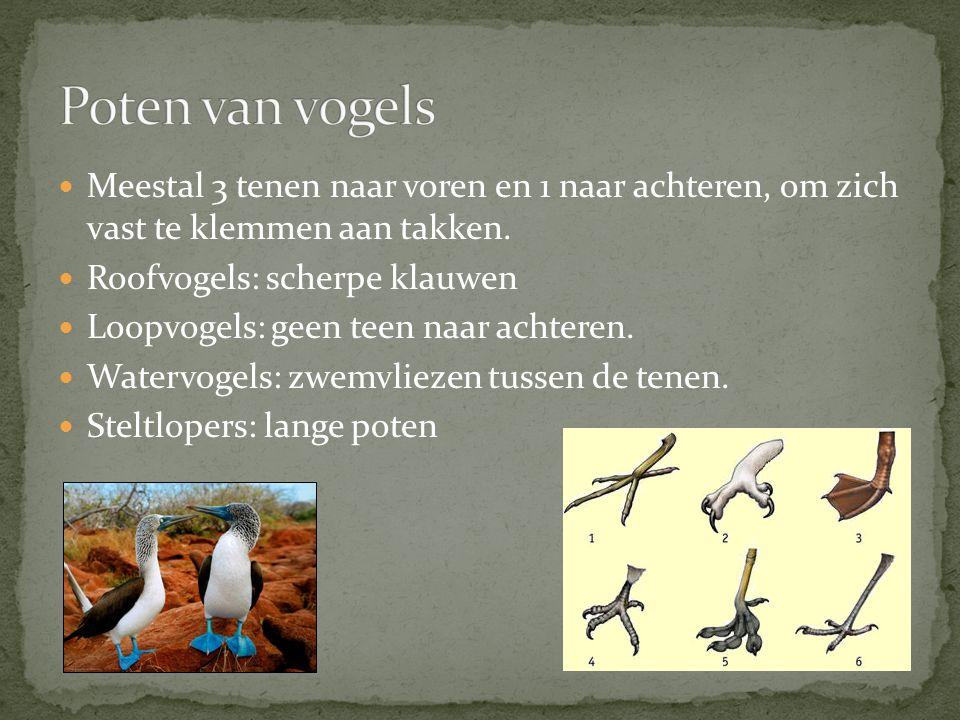 Meestal 3 tenen naar voren en 1 naar achteren, om zich vast te klemmen aan takken. Roofvogels: scherpe klauwen Loopvogels: geen teen naar achteren. Wa