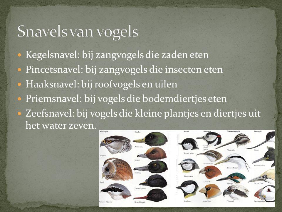 Kegelsnavel: bij zangvogels die zaden eten Pincetsnavel: bij zangvogels die insecten eten Haaksnavel: bij roofvogels en uilen Priemsnavel: bij vogels die bodemdiertjes eten Zeefsnavel: bij vogels die kleine plantjes en diertjes uit het water zeven.