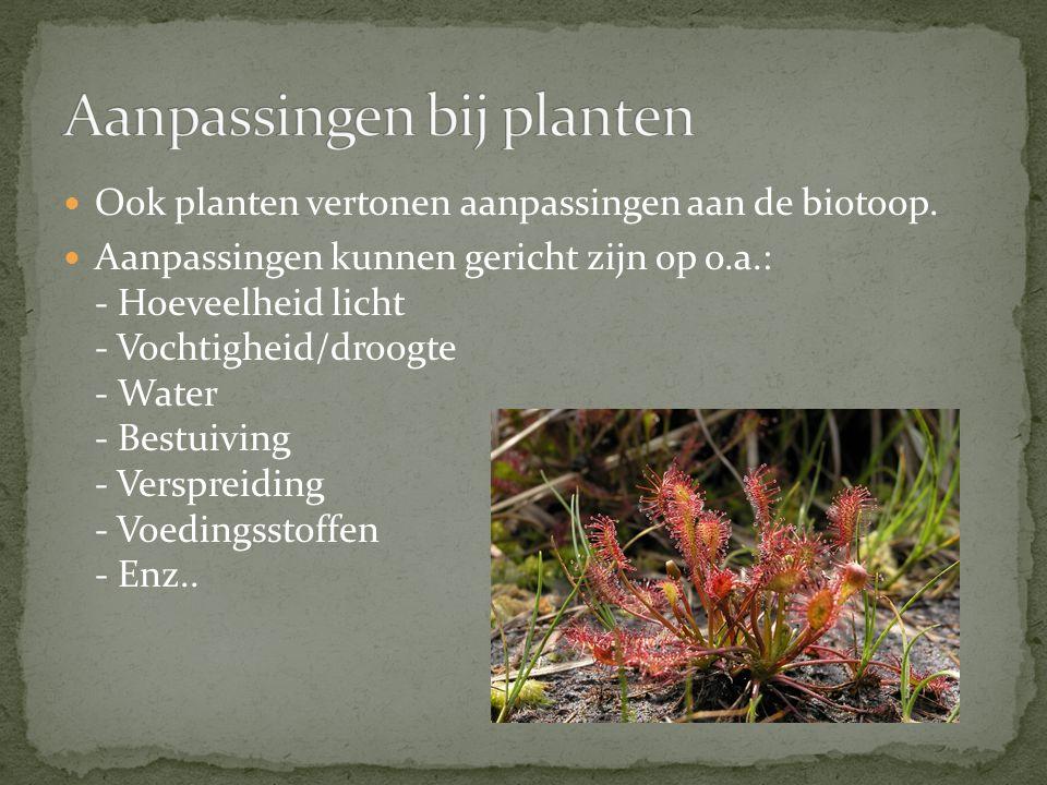 Ook planten vertonen aanpassingen aan de biotoop. Aanpassingen kunnen gericht zijn op o.a.: - Hoeveelheid licht - Vochtigheid/droogte - Water - Bestui
