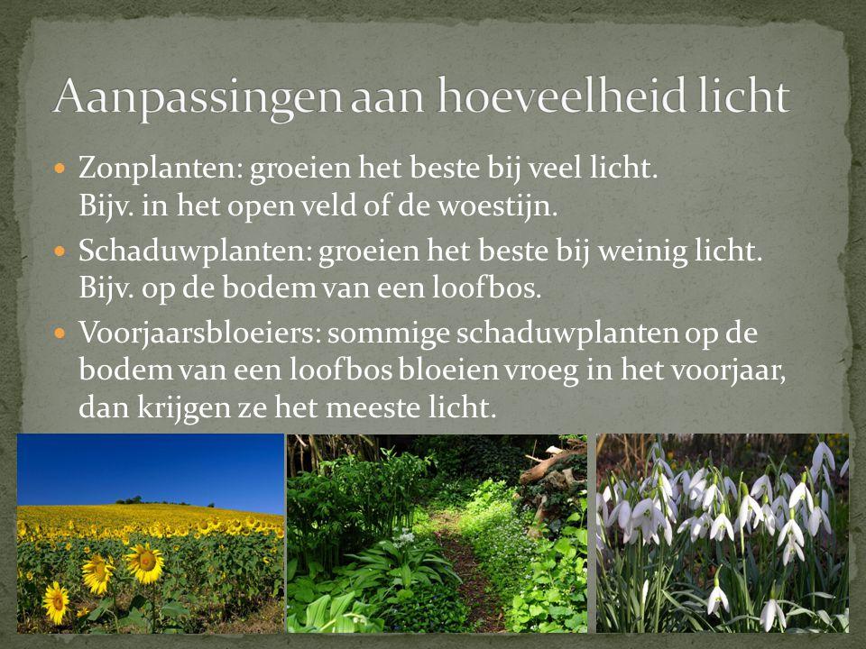 Zonplanten: groeien het beste bij veel licht. Bijv. in het open veld of de woestijn. Schaduwplanten: groeien het beste bij weinig licht. Bijv. op de b