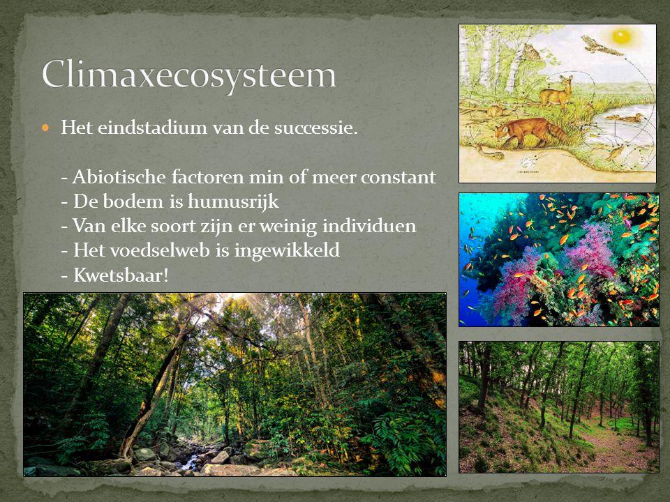 Planten in een vochtig milieu: - Grote, platte bladeren - Zwak ontwikkeld wortelstelsel Planten in een droog milieu: - Kleine, dikke bladeren (soms stekels of haren) - Soms opslag van water in de stengels - Sterk ontwikkeld wortelstelsel