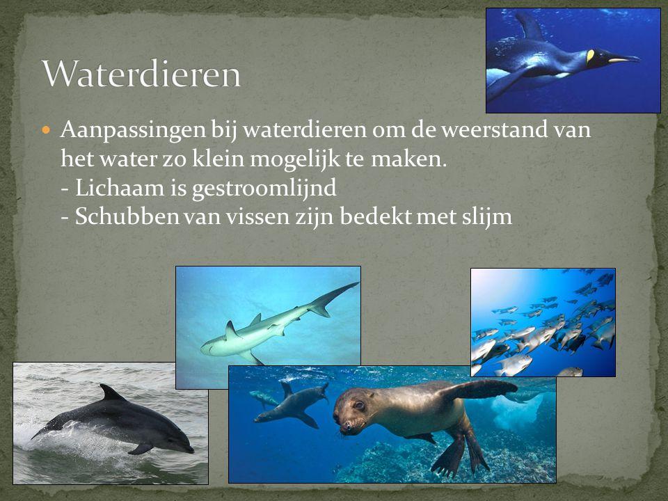 Aanpassingen bij waterdieren om de weerstand van het water zo klein mogelijk te maken. - Lichaam is gestroomlijnd - Schubben van vissen zijn bedekt me