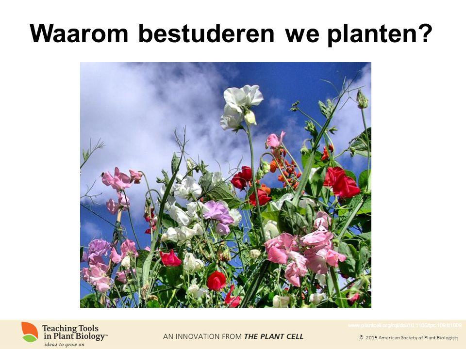 © 2015 American Society of Plant Biologists Waarom bestuderen we planten? www.plantcell.org/cgi/doi/10.1105/tpc.109.tt1009