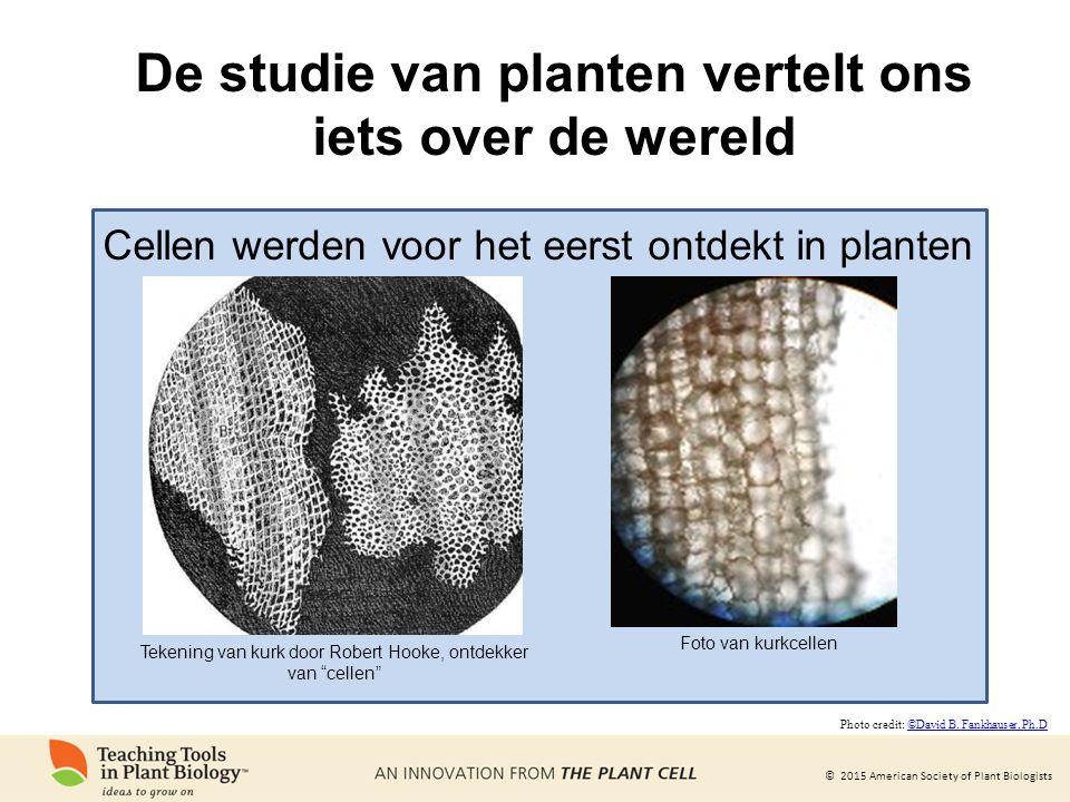 © 2015 American Society of Plant Biologists De studie van planten vertelt ons iets over de wereld Tekening van kurk door Robert Hooke, ontdekker van cellen Cellen werden voor het eerst ontdekt in planten Foto van kurkcellen Photo credit: ©David B.
