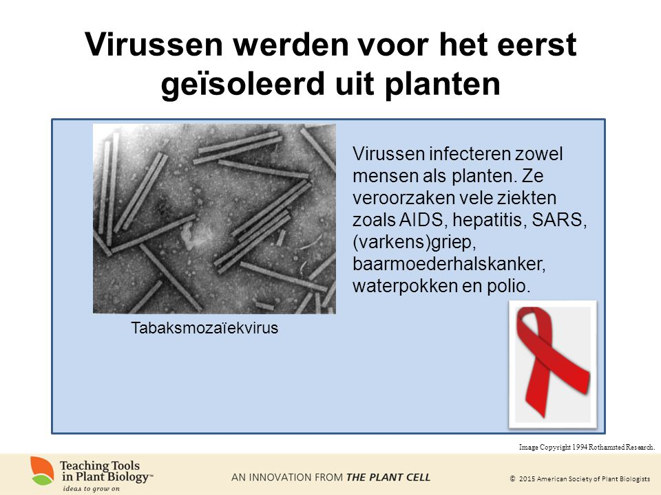 © 2015 American Society of Plant Biologists Virussen werden voor het eerst geïsoleerd uit planten Tabaksmozaïekvirus Virussen infecteren zowel mensen als planten.