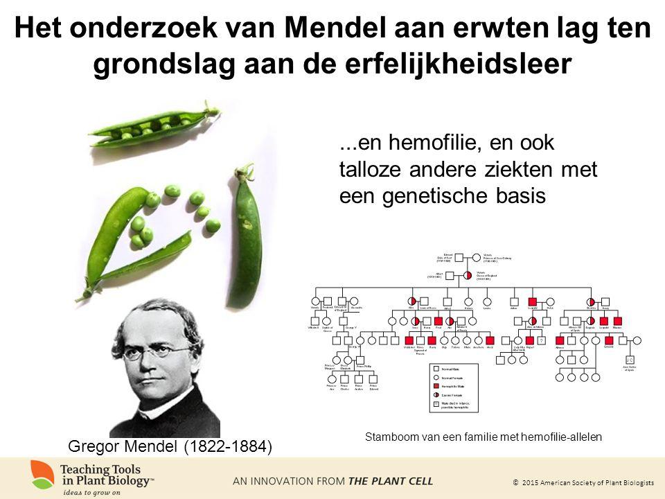 © 2015 American Society of Plant Biologists...en hemofilie, en ook talloze andere ziekten met een genetische basis Stamboom van een familie met hemofilie-allelen Het onderzoek van Mendel aan erwten lag ten grondslag aan de erfelijkheidsleer Gregor Mendel (1822-1884)