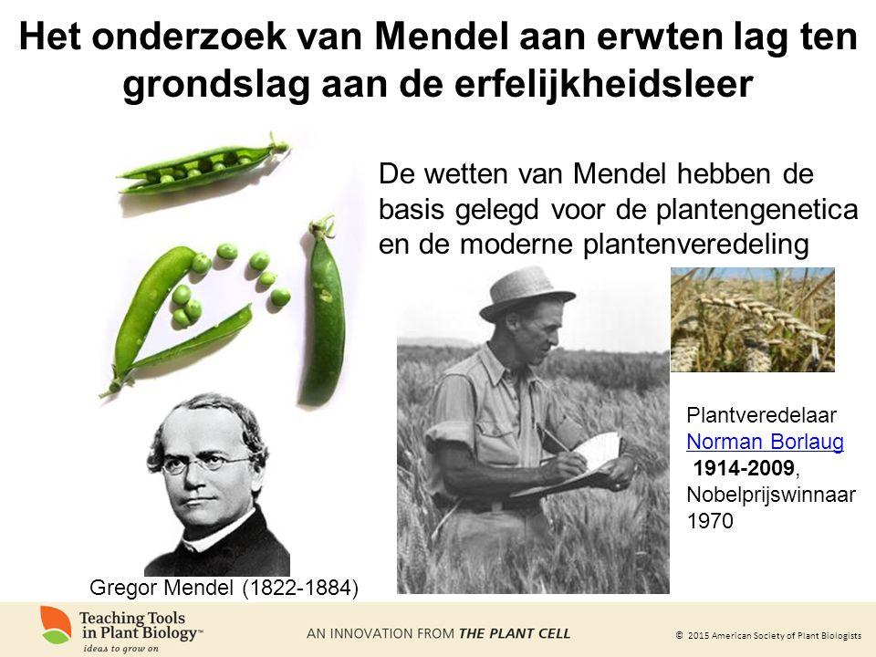 © 2015 American Society of Plant Biologists De wetten van Mendel hebben de basis gelegd voor de plantengenetica en de moderne plantenveredeling Plantveredelaar Norman Borlaug 1914-2009, Nobelprijswinnaar 1970 Het onderzoek van Mendel aan erwten lag ten grondslag aan de erfelijkheidsleer Gregor Mendel (1822-1884)