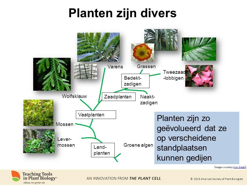 © 2015 American Society of Plant Biologists Planten zijn divers Groene algen Lever- mossen Mossen Vaatplanten Wolfsklauw Varens Zaadplanten Bedekt- za