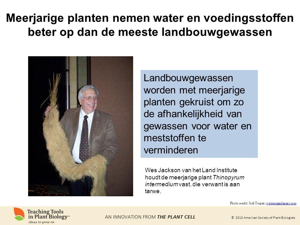 © 2015 American Society of Plant Biologists Landbouwgewassen worden met meerjarige planten gekruist om zo de afhankelijkheid van gewassen voor water e