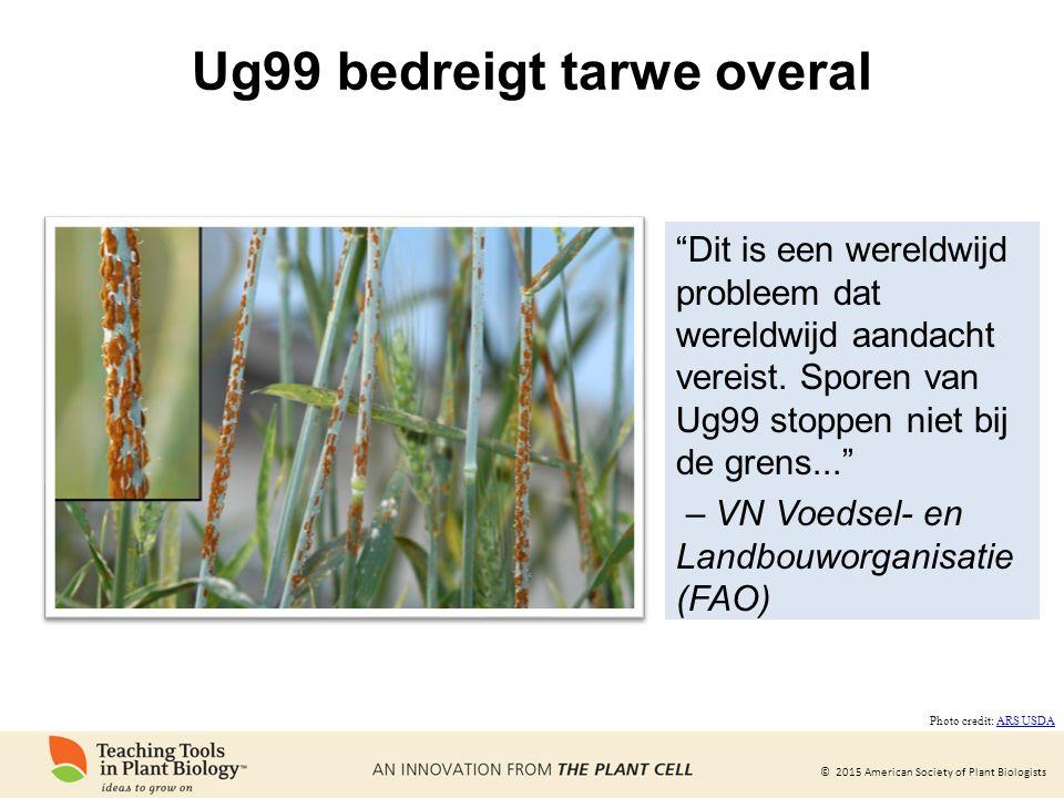 """© 2015 American Society of Plant Biologists Ug99 bedreigt tarwe overal """"Dit is een wereldwijd probleem dat wereldwijd aandacht vereist. Sporen van Ug9"""