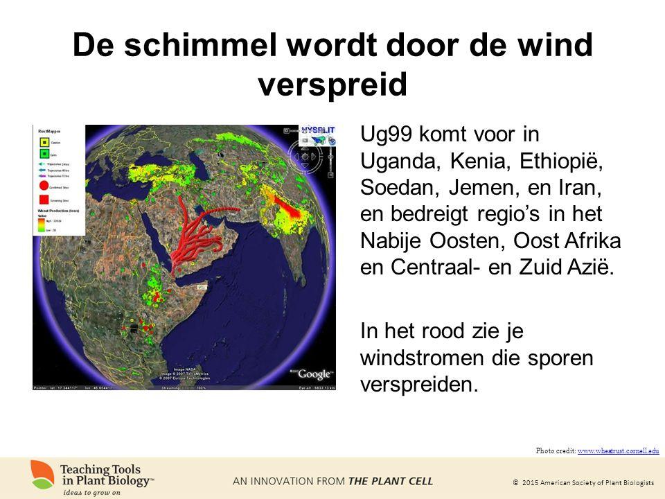 © 2015 American Society of Plant Biologists De schimmel wordt door de wind verspreid Ug99 komt voor in Uganda, Kenia, Ethiopië, Soedan, Jemen, en Iran, en bedreigt regio's in het Nabije Oosten, Oost Afrika en Centraal- en Zuid Azië.