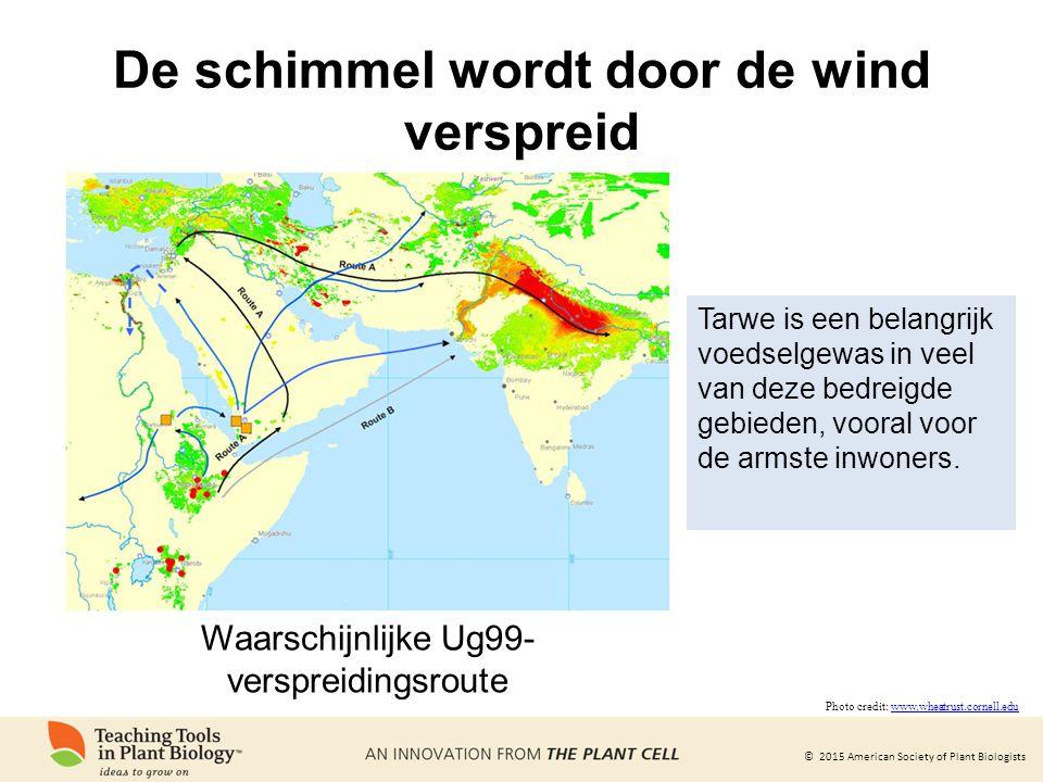 © 2015 American Society of Plant Biologists De schimmel wordt door de wind verspreid Tarwe is een belangrijk voedselgewas in veel van deze bedreigde g