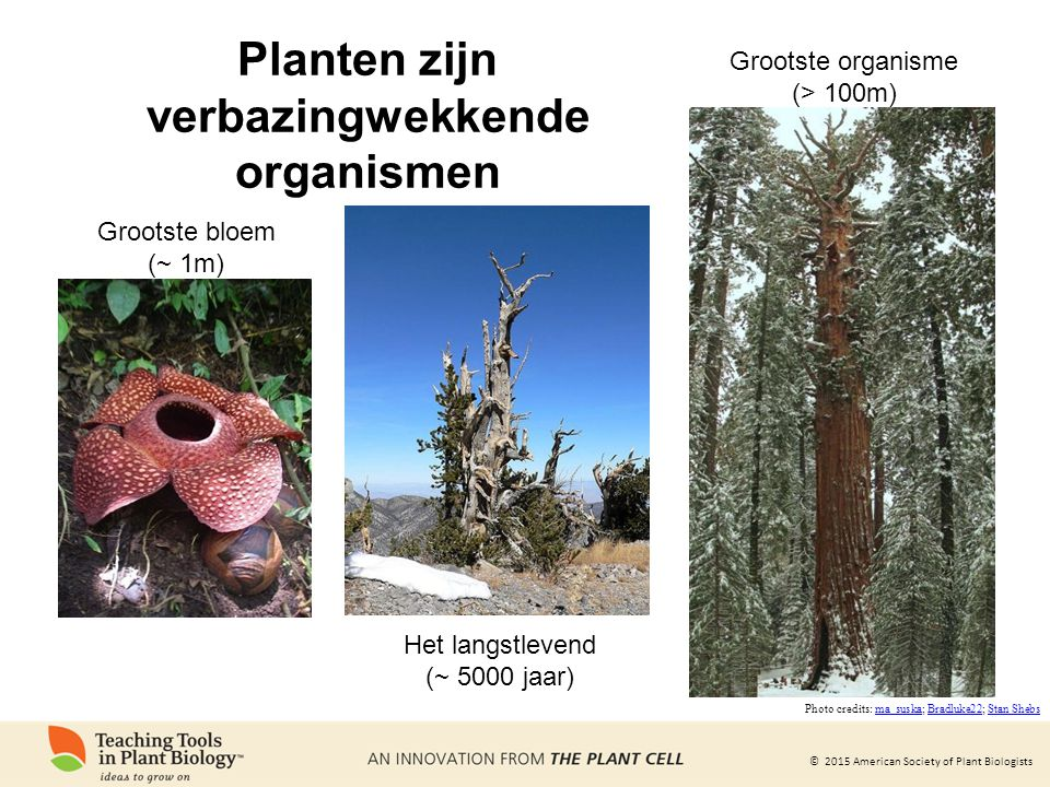 © 2015 American Society of Plant Biologists Planten zijn verbazingwekkende organismen Grootste bloem (~ 1m) Het langstlevend (~ 5000 jaar) Grootste organisme (> 100m) Photo credits: ma_suska; Bradluke22; Stan Shebsma_suskaBradluke22Stan Shebs