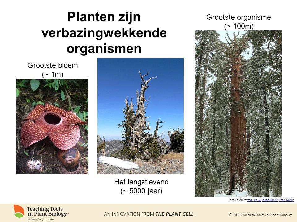 © 2015 American Society of Plant Biologists Planten zijn verbazingwekkende organismen Grootste bloem (~ 1m) Het langstlevend (~ 5000 jaar) Grootste or