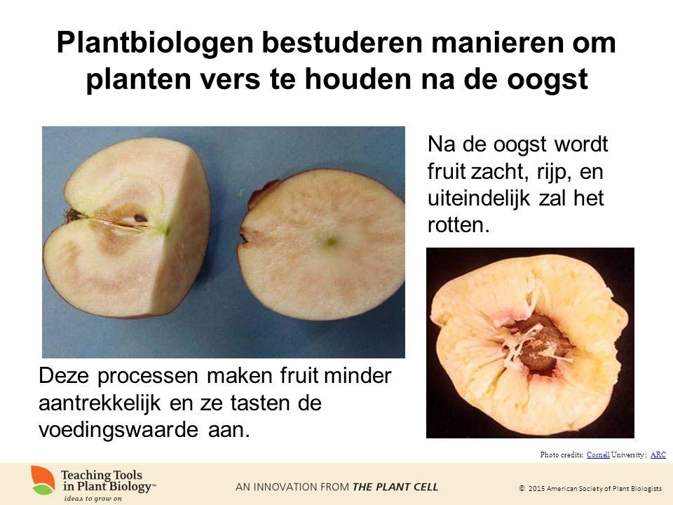 © 2015 American Society of Plant Biologists Plantbiologen bestuderen manieren om planten vers te houden na de oogst Na de oogst wordt fruit zacht, rij