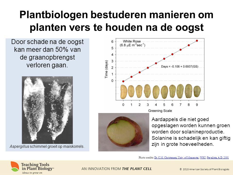 © 2015 American Society of Plant Biologists Aardappels die niet goed opgeslagen worden kunnen groen worden door solanineproductie. Solanine is schadel