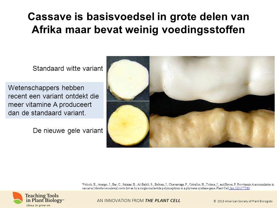© 2015 American Society of Plant Biologists Cassave is basisvoedsel in grote delen van Afrika maar bevat weinig voedingsstoffen Wetenschappers hebben recent een variant ontdekt die meer vitamine A produceert dan de standaard variant.
