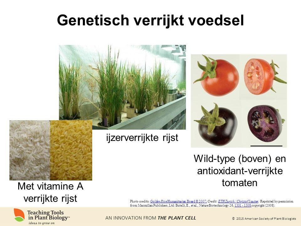 © 2015 American Society of Plant Biologists Genetisch verrijkt voedsel ijzerverrijkte rijst Wild-type (boven) en antioxidant-verrijkte tomaten Photo c