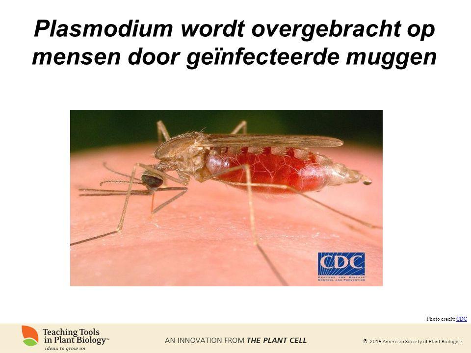 © 2015 American Society of Plant Biologists Plasmodium wordt overgebracht op mensen door geïnfecteerde muggen Photo credit: CDCCDC