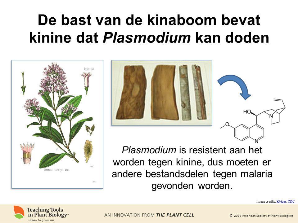 © 2015 American Society of Plant Biologists Plasmodium is resistent aan het worden tegen kinine, dus moeten er andere bestandsdelen tegen malaria gevonden worden.