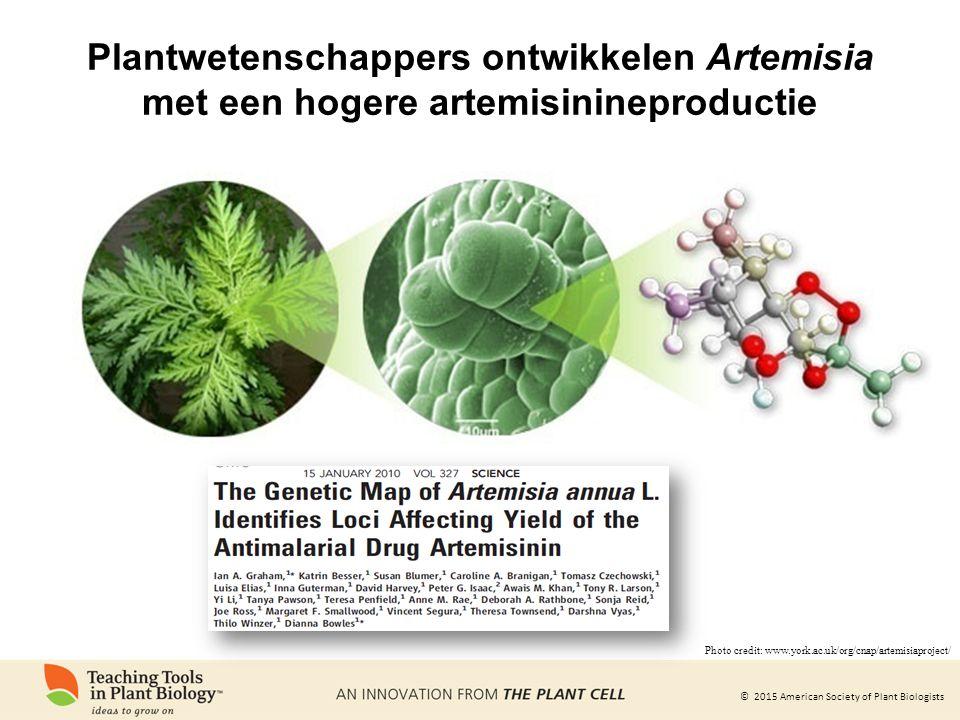 © 2015 American Society of Plant Biologists Plantwetenschappers ontwikkelen Artemisia met een hogere artemisinineproductie Photo credit: www.york.ac.uk/org/cnap/artemisiaproject/