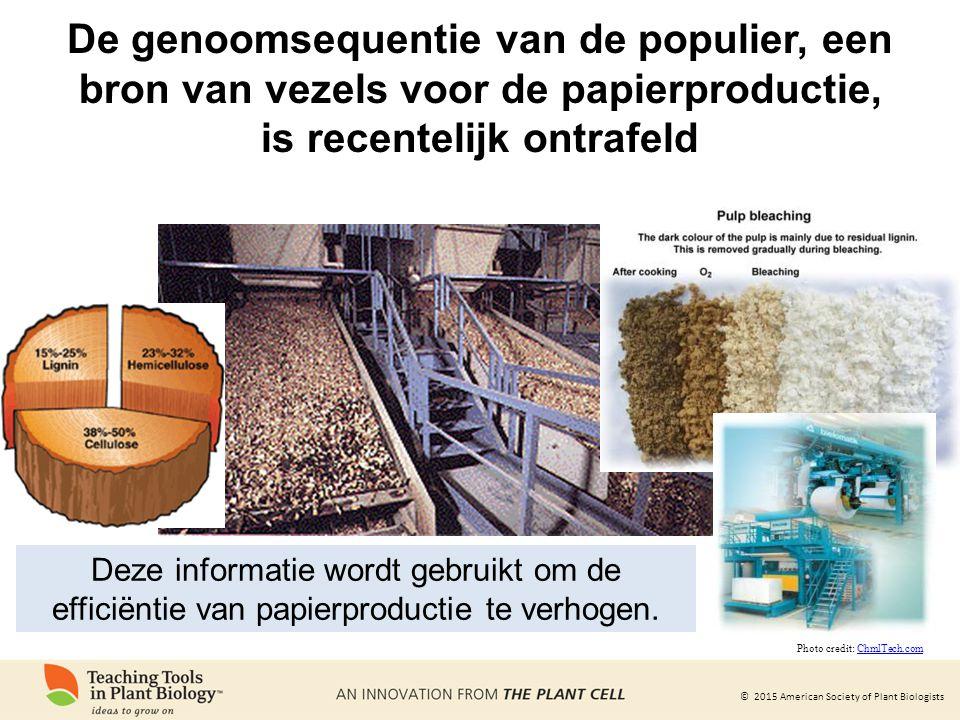© 2015 American Society of Plant Biologists De genoomsequentie van de populier, een bron van vezels voor de papierproductie, is recentelijk ontrafeld Deze informatie wordt gebruikt om de efficiëntie van papierproductie te verhogen.