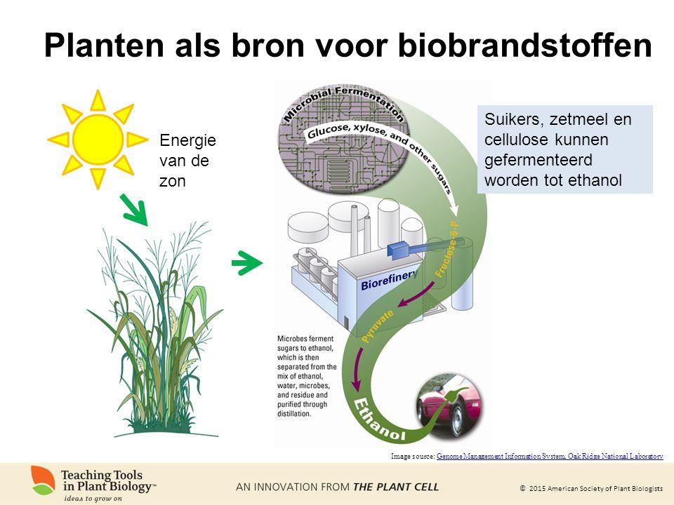 © 2015 American Society of Plant Biologists Planten als bron voor biobrandstoffen Energie van de zon Image source: Genome Management Information Syste
