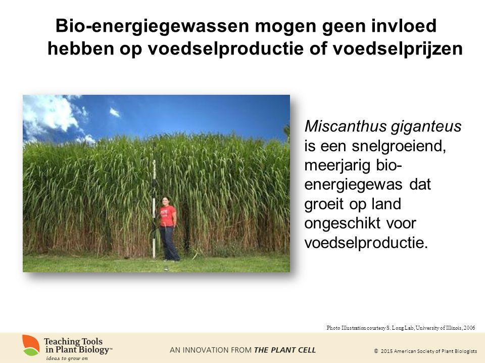 © 2015 American Society of Plant Biologists Bio-energiegewassen mogen geen invloed hebben op voedselproductie of voedselprijzen Miscanthus giganteus is een snelgroeiend, meerjarig bio- energiegewas dat groeit op land ongeschikt voor voedselproductie.