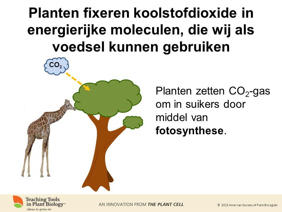 © 2015 American Society of Plant Biologists Planten fixeren koolstofdioxide in energierijke moleculen, die wij als voedsel kunnen gebruiken CO 2 Planten zetten CO 2 -gas om in suikers door middel van fotosynthese.